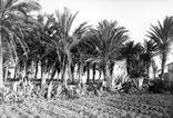 Oasis du Hammam