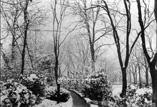 La neige au Jardin des plantes