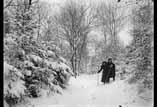 Bédat Sous bois avec neige