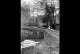 Un carrefour sous bois