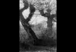 Vieil arbre et fonds d'arbres