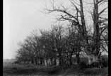 Bois de Lahitte
