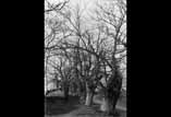 Forêt d'arbres en hiver