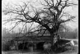 Pont rivière arbres sans feuilles