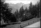 Foret dans le village et vue sur les sommets de la vallée